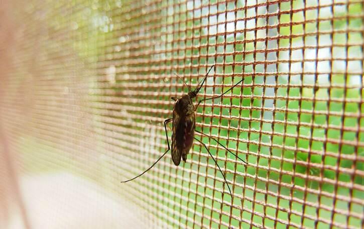 Защо да ползваме комарници у дома